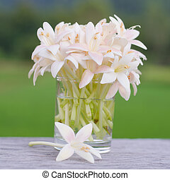 Indian cork flower  - Indian cork flower