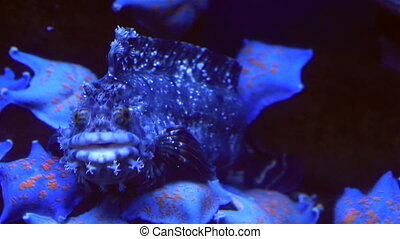 Synanceia verrucosa in beautifully decorated Marine...