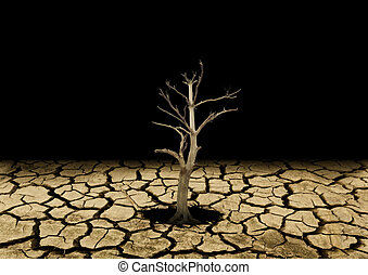 dry tree planted in a rocky desert terrain or