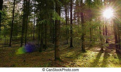 Spring forest and the sun