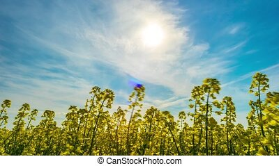 Canola field, timelapse with slider