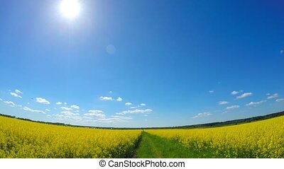 By car through the canola field