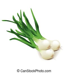 Green onions isolated on white vector