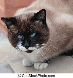 Silly looking cross-eyed cat - Close up of silly looking...