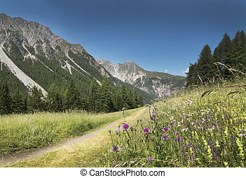 Mountains  in the Alps with flowers