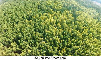 Forest - Flying over mixed forest