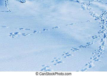 Animal tracks in snow - Animal tracks in fresh snow, natural...