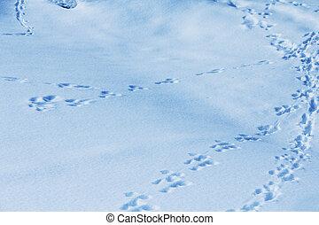 Animal tracks in snow - Animal tracks in fresh snow, natural...