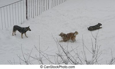 Homeless dogs playing in snow - Two cheerful homeless...