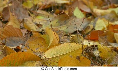 yellow autumn leaves lie on the ground background - yellow...