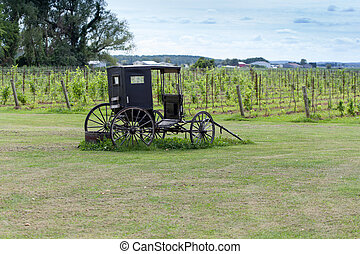 Abandoned stagecoach on field with vineyard in the...