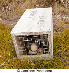 Small animal trap with written warning for humans - Baited...