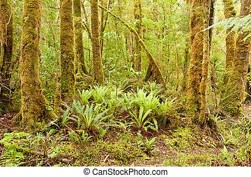 Lush green NZ fern tree rainforest wilderness - Lush green...