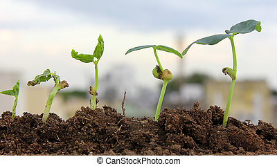 Plant growth-New life  - Plant growth-Baby plants