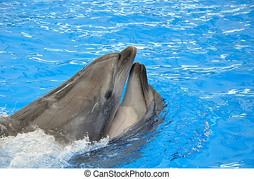 two bottlenose dolphins in blue water