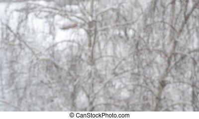 Snow falling on background of leafless birch tree