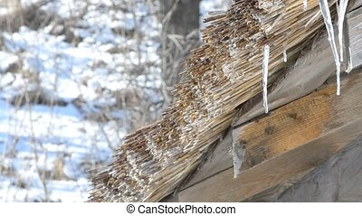 Water from melting snow and ice dropping from thatched roof...