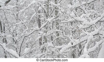 Snow falling in forest on background of leafless trees -...