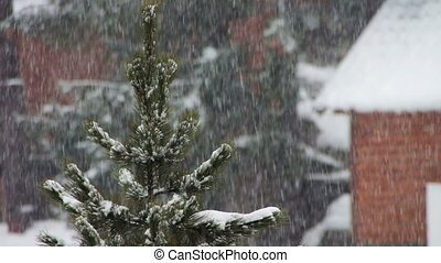 The snow is falling and Christmas tree. - On the street...