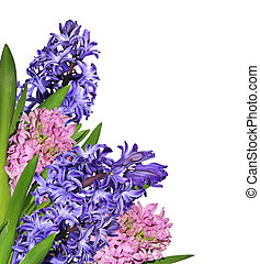Hyacinths - Bouquet of pink and blue hyacinths close up...