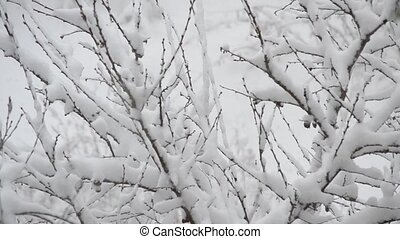 Snow falling on background of snow covered leafless fruit tree