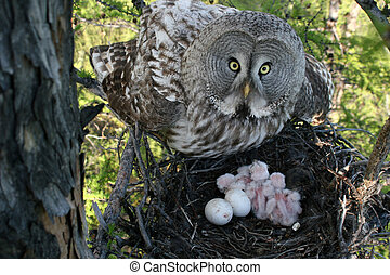 owl with nestling in jack - owl in jack with nestling and...