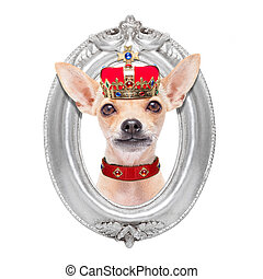 crown king dog - chihuahua dog as king with crown looking...