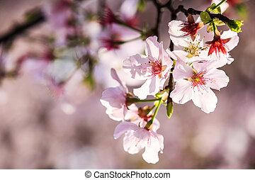 Beautiful Sakura Garden in Taipei, Taiwan - The Beautiful...