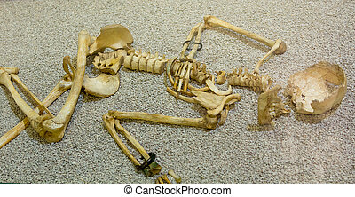 Old skeleton of a human being
