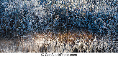Bluegrass bushes in November. - Morning dawn on ice and...