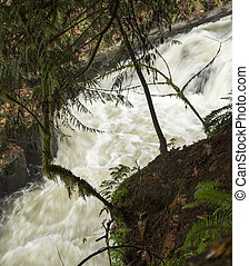 Cedar Creek near the Old Grist Mill: Woodland, Washington -...