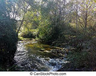 Guadarrama, Rzeka, Między, roślinność, chwilowy, Przez,...