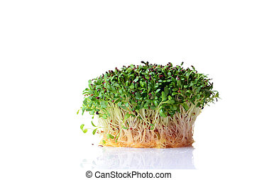 Sprouted alfalfa seeds on white background
