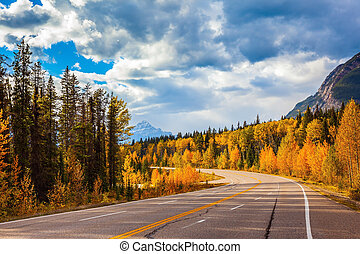 Highway and orange autumn forest