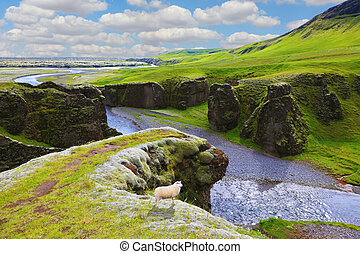 Dreamland canyon Fjadrargljufur - Dreamland Iceland. The...
