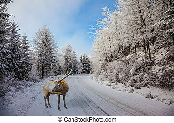 The snow-covered road and red deer - The snow-covered road...
