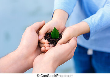 Small green plant in open hands - Life in our hands Close up...