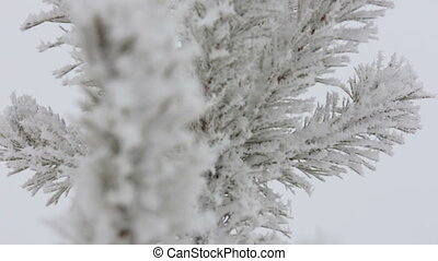 Beautiful winter rime on the branch