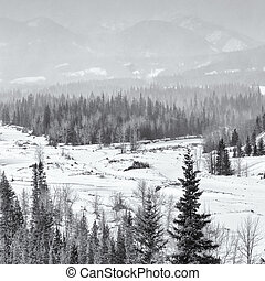 Snow Storm Over the Rocky Mountains - Square landscape of a...