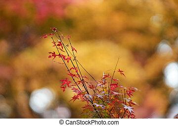 fall season at Kyoto temple