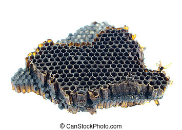 old bee nest on white background
