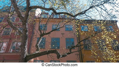 Big Tree In Spring Time With Buildings - Sunlight through a...