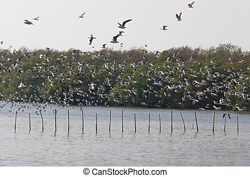 Birds masses - The birds fly out of tricky flying...