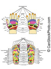 Acupuncture - Foot and hand - Traditional alternative heal,...