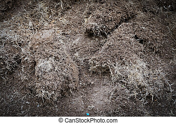 yard work, preparation soil in garden with dry grass
