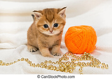 Little kitty and a skein of wool on a white blanket