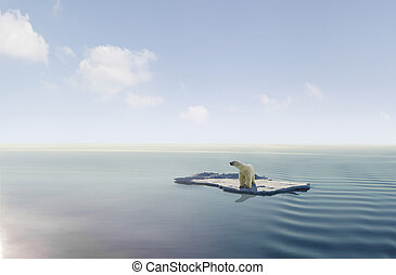 Climate change - Polar bear on an ice floe