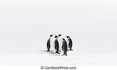 emperador, Pingüinos