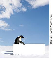 Penguin - Emperor penguin holding a billboard
