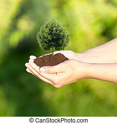 Planting a tree - Hand holding soil with tree in heart shape...